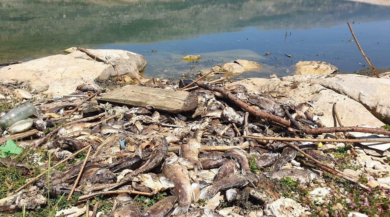قضية الاسماك النافقة في بحيرة القرعون تهدد الامن الصحي في لبنان(تقرير)
